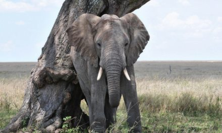 The Elephant That Will Not Forget to Boost Your Productivity