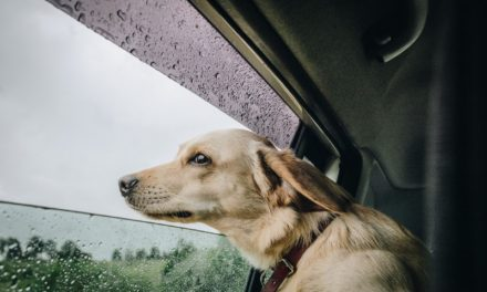 What My Dog Taught Me About God