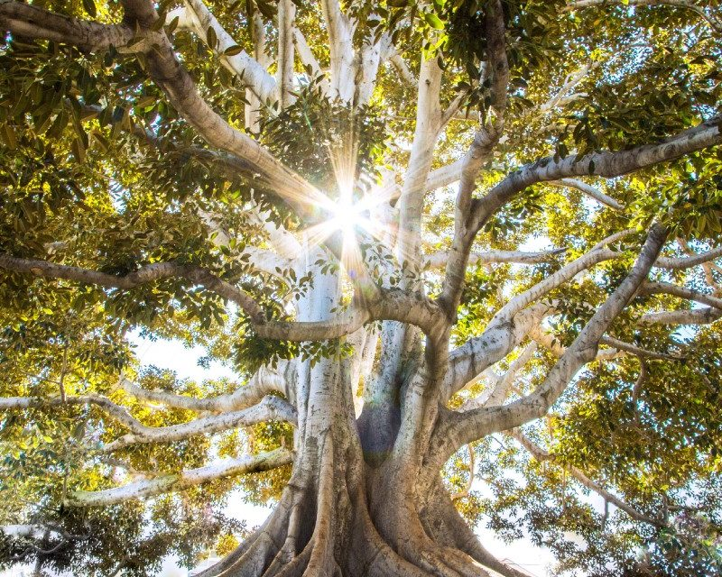 The Parable of the Tree