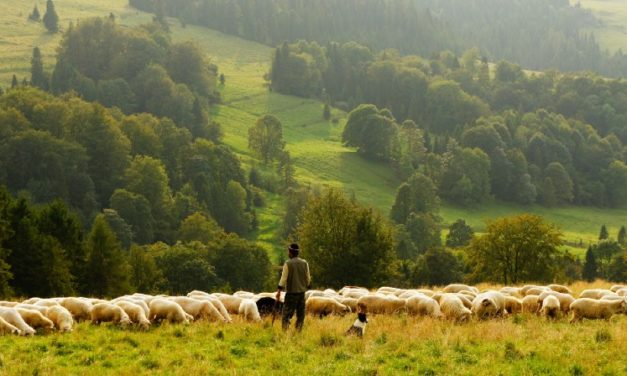 The Power of Psalm 23 in Your Life