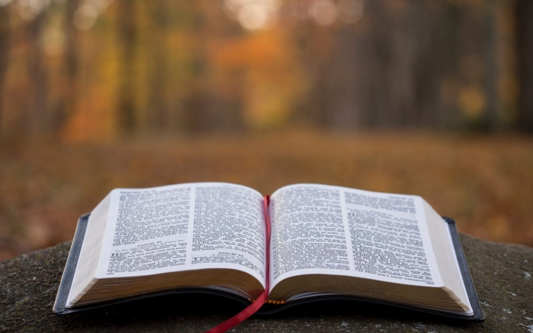 How To Read the Bible For All It'sWorth