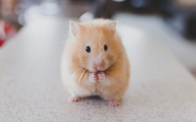 Powerful lessons from a mouse who wanted to be theLion