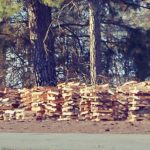 firewood for spring