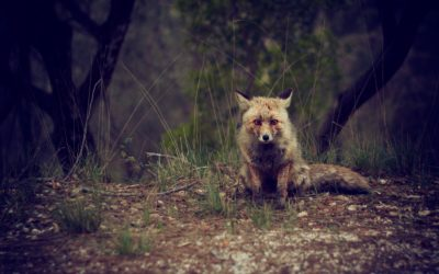 Are you a hedgehog or a fox?-Why some people get the future right and somedon't